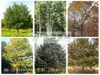 怎样尽快发展乡土植物,才能满足园林绿化的需要?