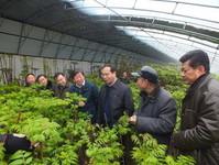 重庆大棚香椿苗在河南郑州市'安家',给当地农户带来可观效益
