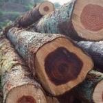 木材进口报关需要哪些单证