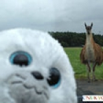 野生动物园及户外探险游戏一日游