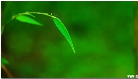 草木養生--我的美麗中國夢