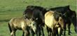 Grassland / Animal Husbandry