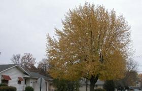 园林绿地中的景观树品种选配