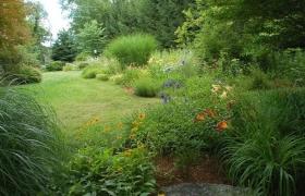 景观草特性及用途大全