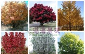 景观树最详细的分类