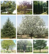 河北、山东树种