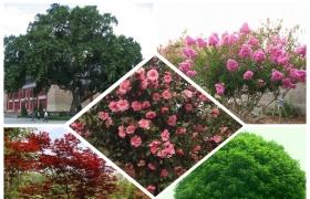 常见园林工程中各类情景配置什么景观树好