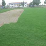 湖南马尼拉草坪
