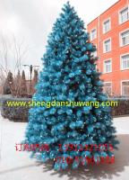 蓝色松针圣诞树3米厂家直销 电话13911321055