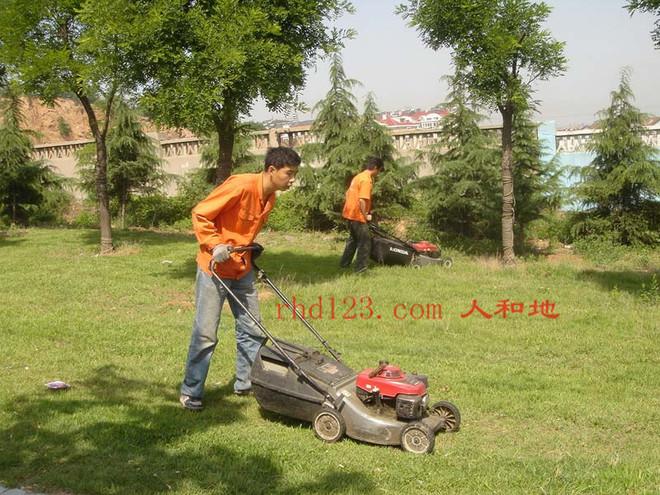 修剪马尼拉草坪21.jpg