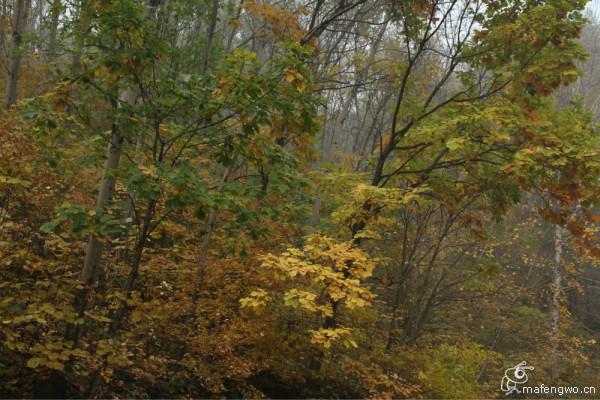 秋天的童话——怀柔喇叭沟门白桦林风景区