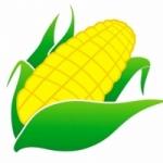 玉米�L采
