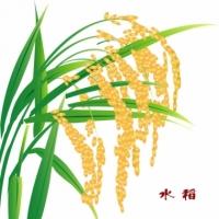 水稻�L情