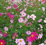 花卉�L�